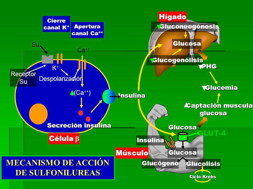 MECANISMO DE ACCIÓN DE SULFONILUREAS