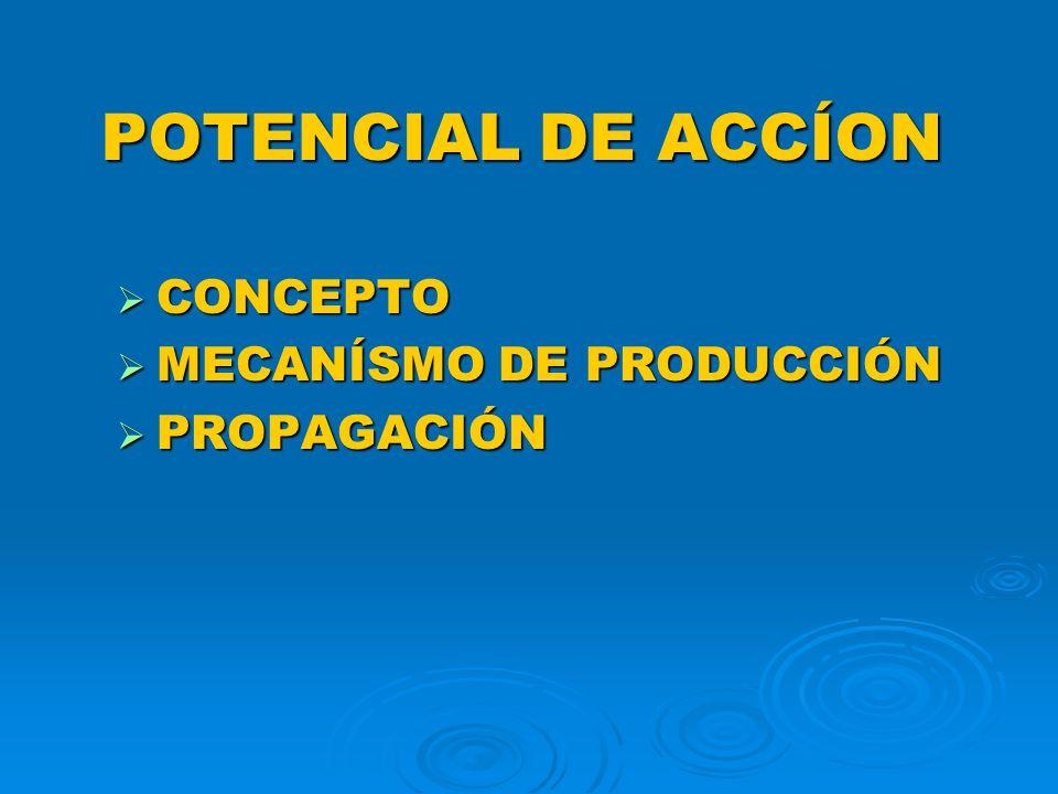 POTENCIAL DE ACCÍON CONCEPTO MECANÍSMO DE PRODUCCIÓN PROPAGACIÓN
