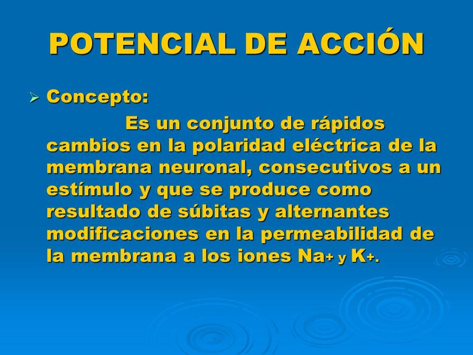 POTENCIAL DE ACCIÓN Concepto: