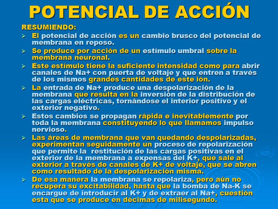 POTENCIAL DE ACCIÓN RESUMIENDO: