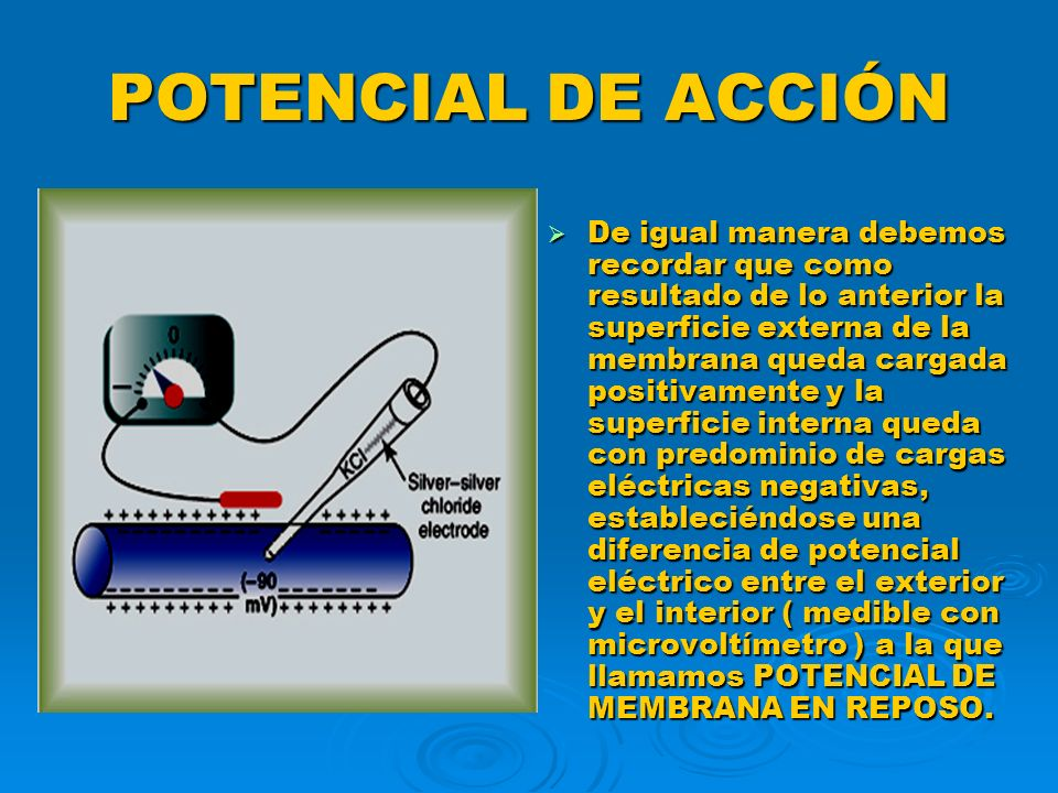 POTENCIAL DE ACCIÓN