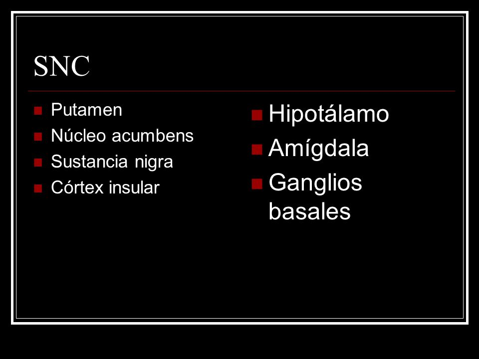 SNC Hipotálamo Amígdala Ganglios basales Putamen Núcleo acumbens