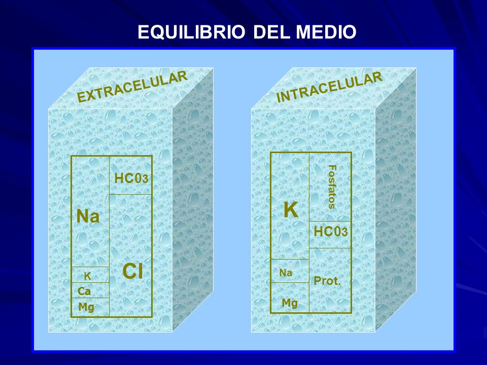 K Cl EQUILIBRIO DEL MEDIO Na EXTRACELULAR INTRACELULAR HC03 HC03 Prot.
