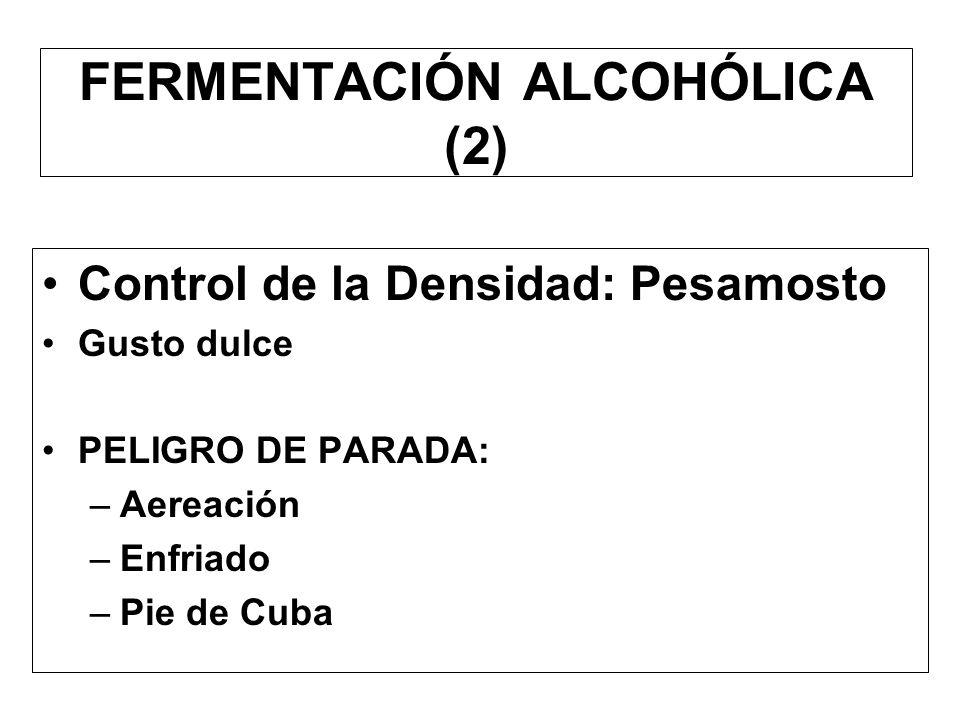 FERMENTACIÓN ALCOHÓLICA (2)