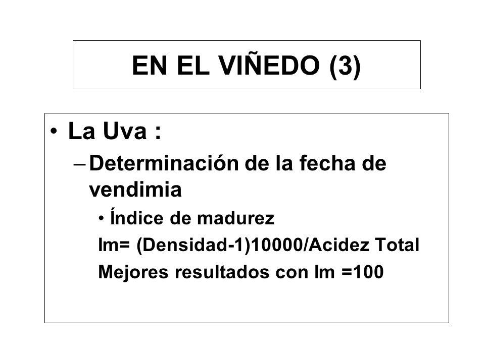 EN EL VIÑEDO (3) La Uva : Determinación de la fecha de vendimia