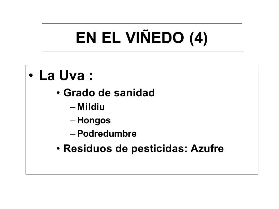 EN EL VIÑEDO (4) La Uva : Grado de sanidad