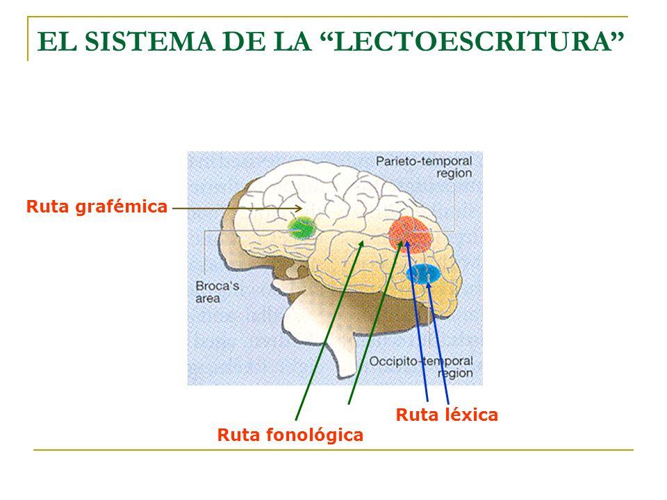 EL SISTEMA DE LA LECTOESCRITURA