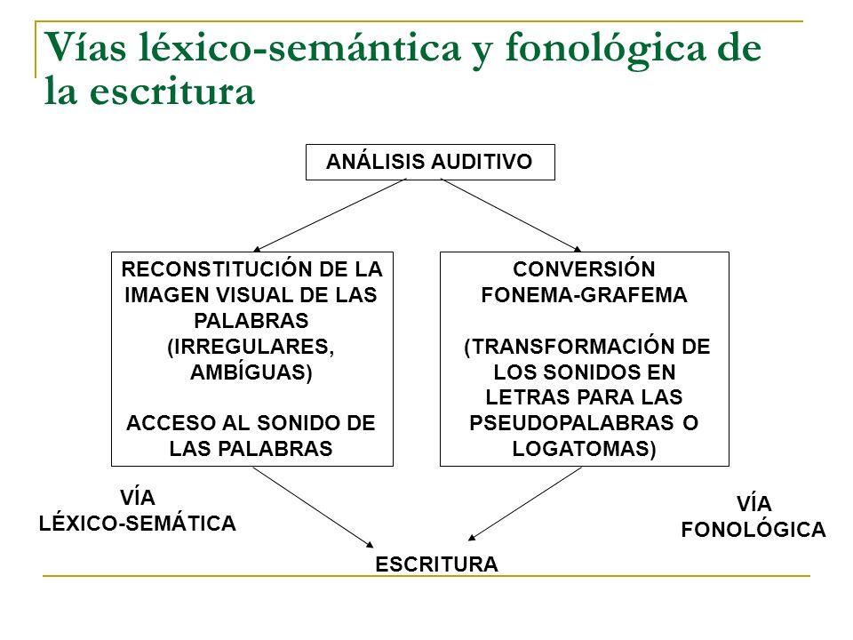 Vías léxico-semántica y fonológica de la escritura
