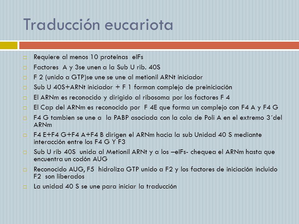 Traducción eucariota Requiere al menos 10 proteínas eIFs