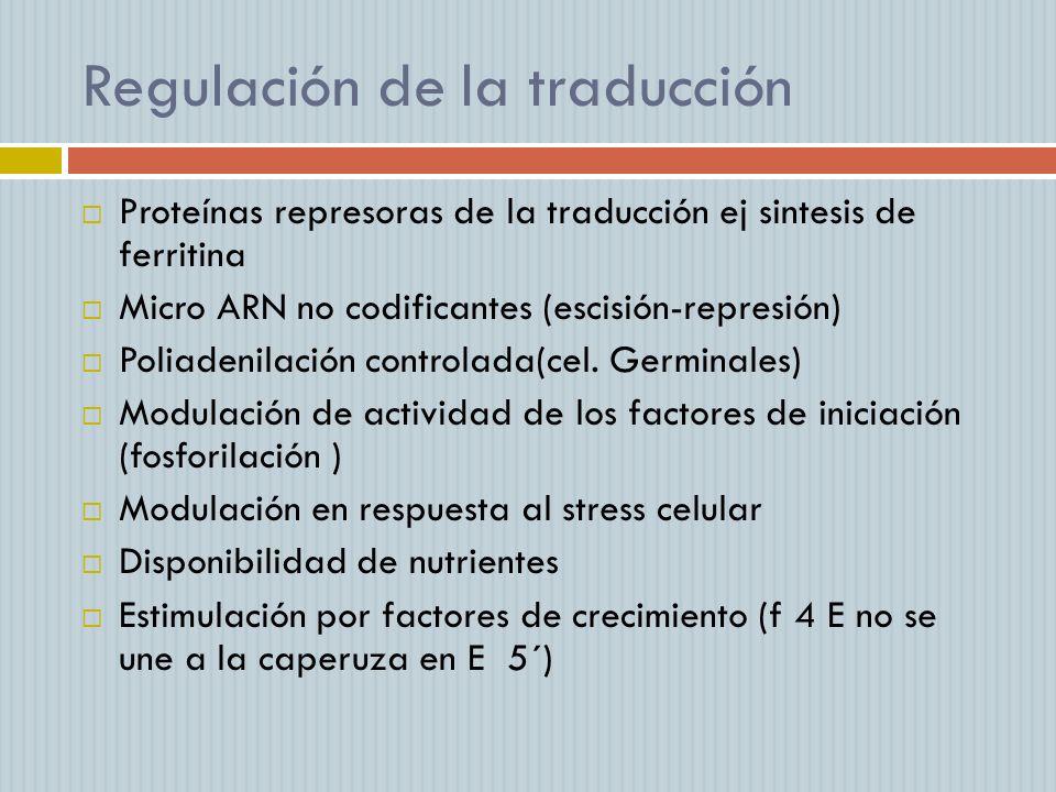 Regulación de la traducción