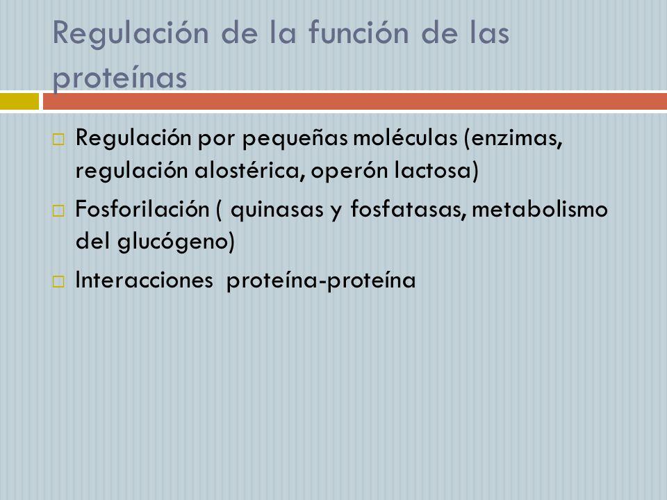 Regulación de la función de las proteínas