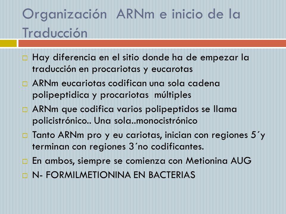 Organización ARNm e inicio de la Traducción