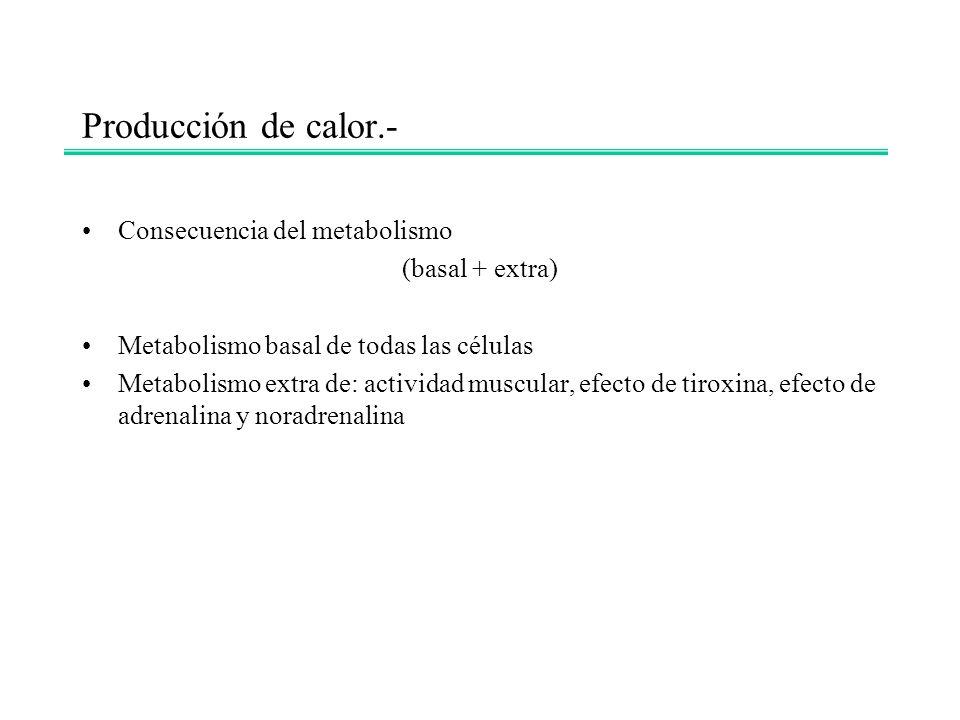 Producción de calor.- Consecuencia del metabolismo (basal + extra)