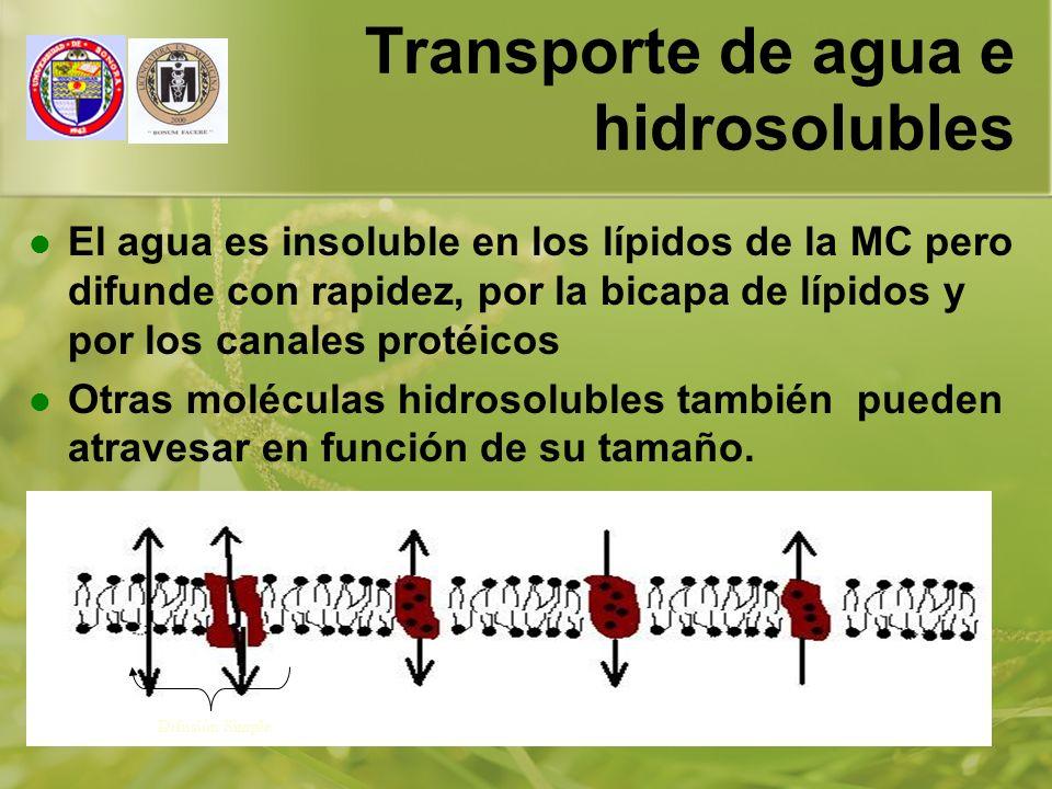 Transporte de agua e hidrosolubles