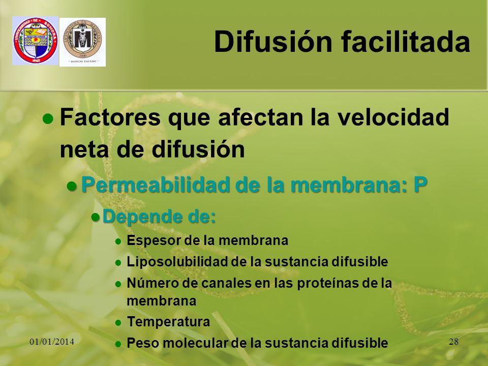 Difusión facilitada Factores que afectan la velocidad neta de difusión