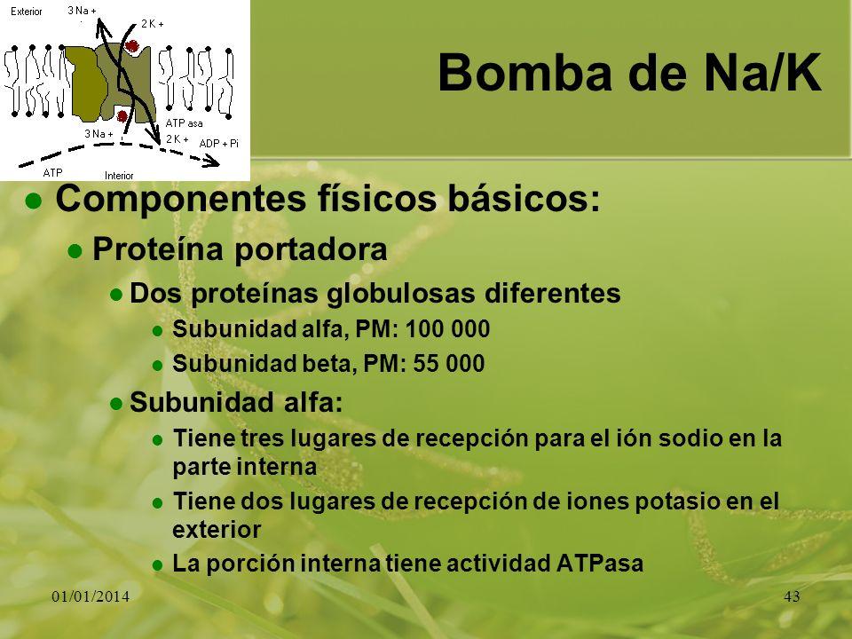 Bomba de Na/K Componentes físicos básicos: Proteína portadora