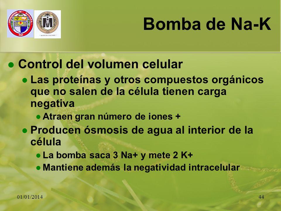 Bomba de Na-K Control del volumen celular