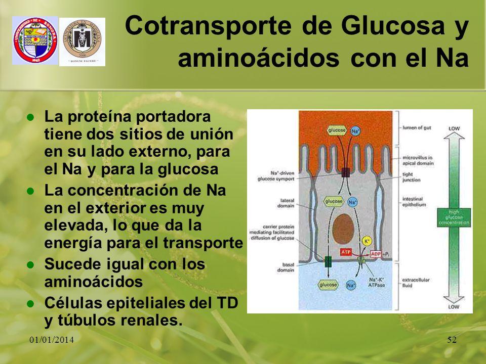 Cotransporte de Glucosa y aminoácidos con el Na