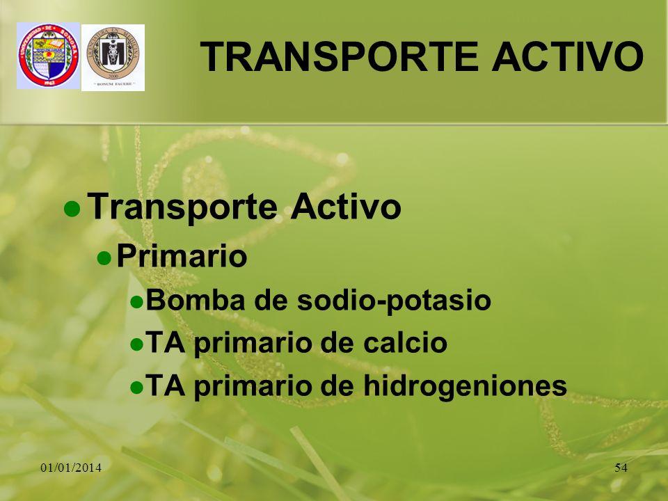 TRANSPORTE ACTIVO Transporte Activo Primario Bomba de sodio-potasio