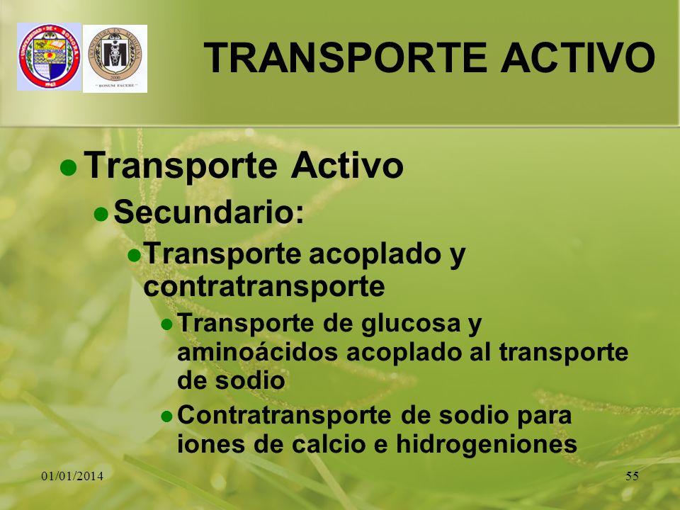TRANSPORTE ACTIVO Transporte Activo Secundario: