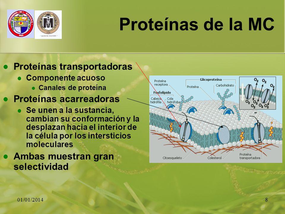 Proteínas de la MC Proteínas transportadoras Proteínas acarreadoras