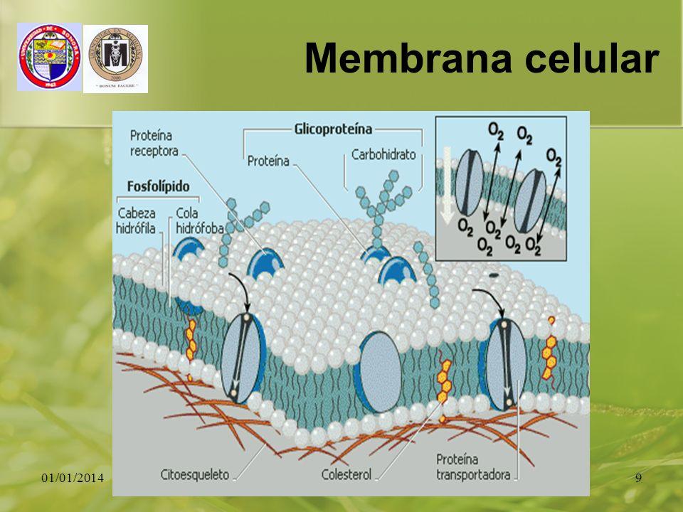 Membrana celular 23/03/2017