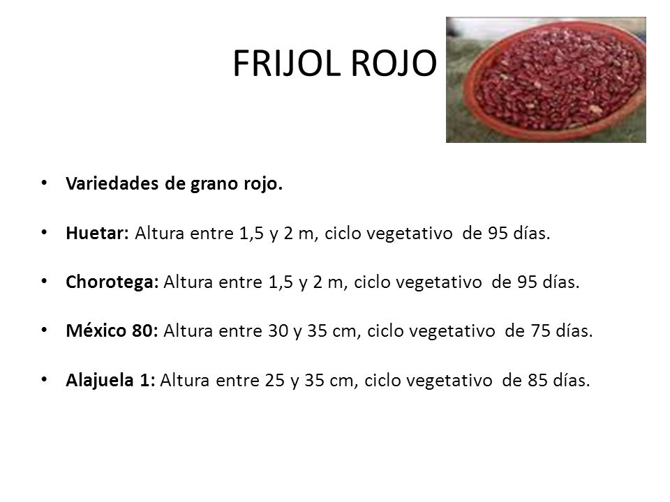 FRIJOL ROJO Variedades de grano rojo.