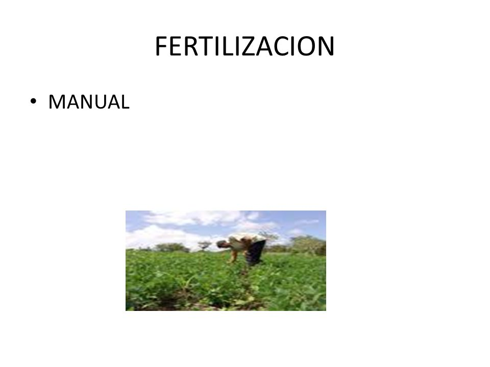 FERTILIZACION MANUAL