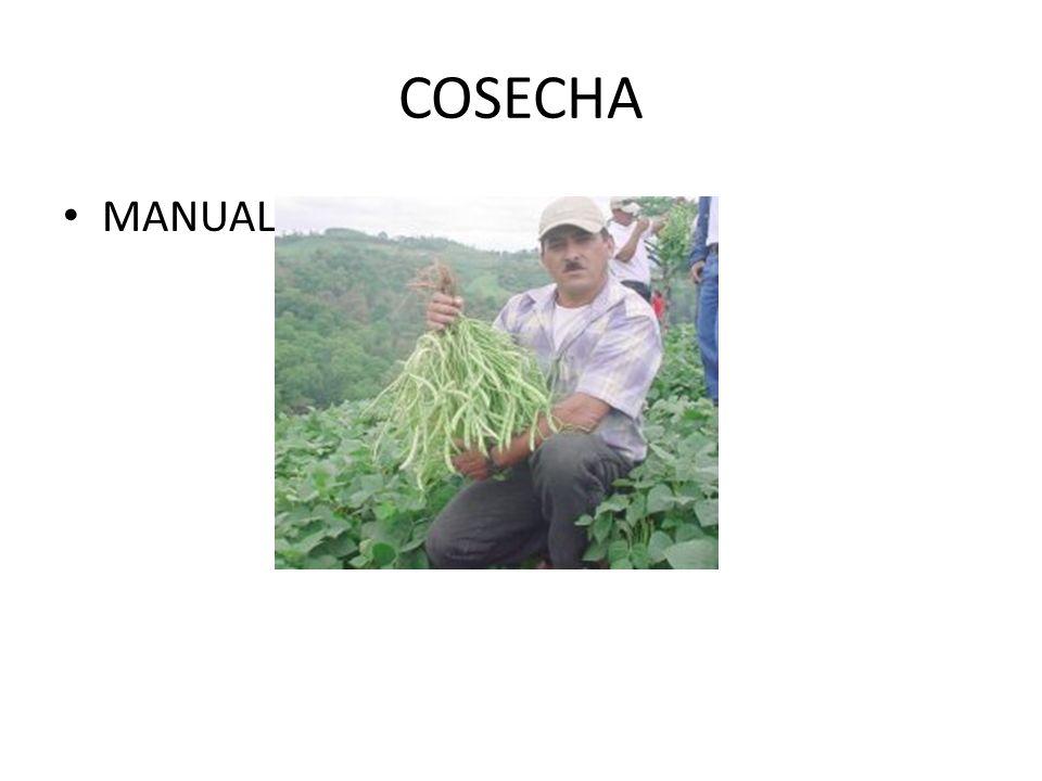 COSECHA MANUAL