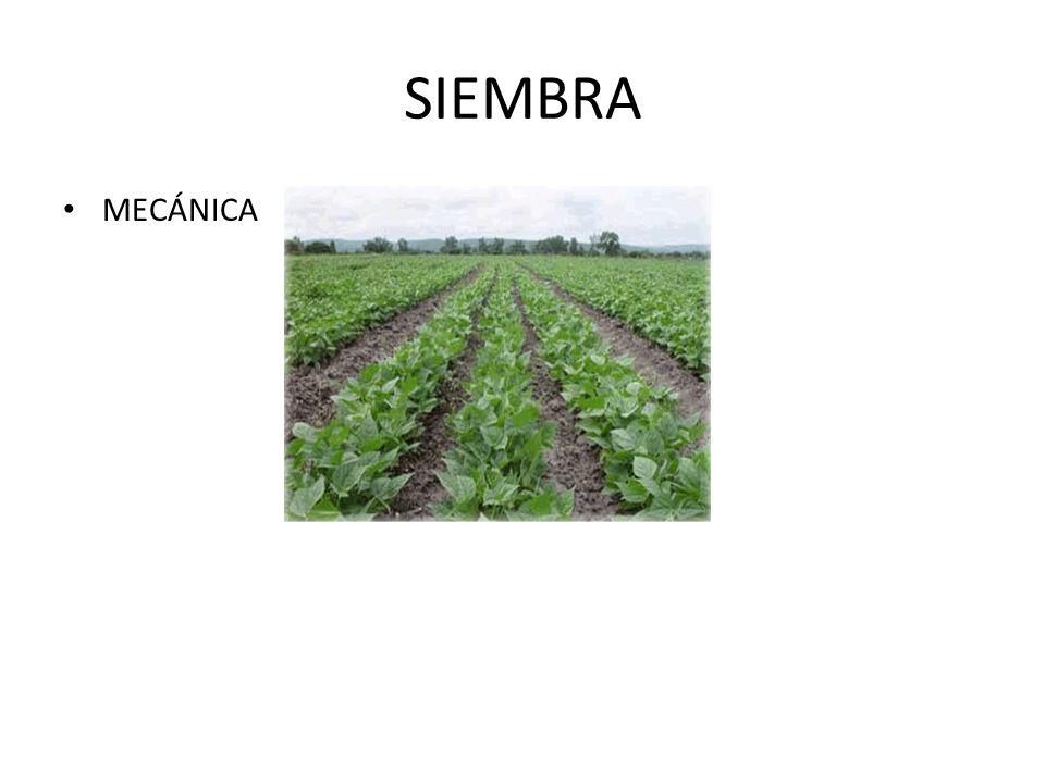 SIEMBRA MECÁNICA
