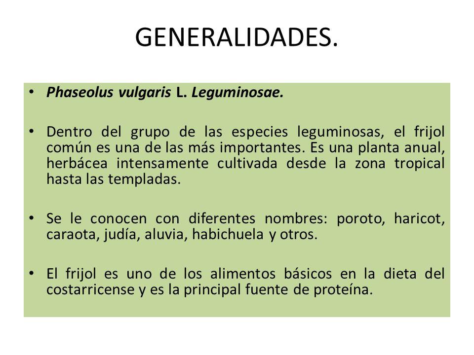 GENERALIDADES. Phaseolus vulgaris L. Leguminosae.
