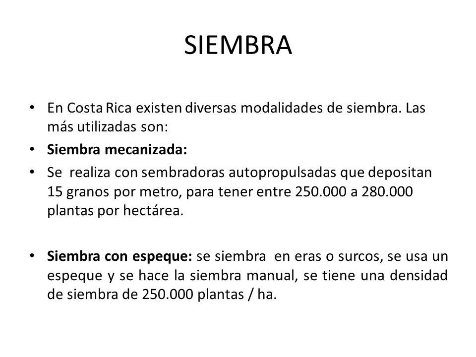 SIEMBRA En Costa Rica existen diversas modalidades de siembra. Las más utilizadas son: Siembra mecanizada:
