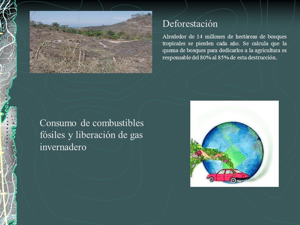 Consumo de combustibles fósiles y liberación de gas invernadero