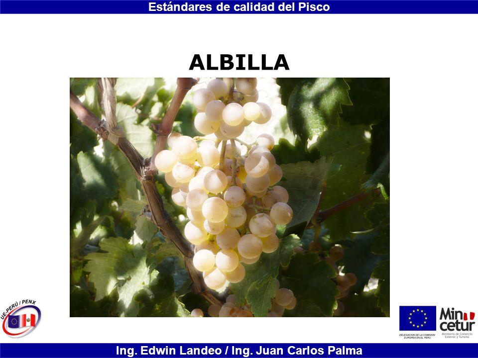ALBILLA
