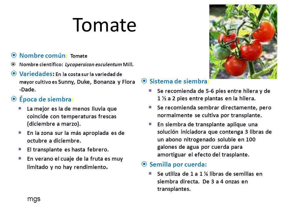 Tomate Nombre común: Tomate