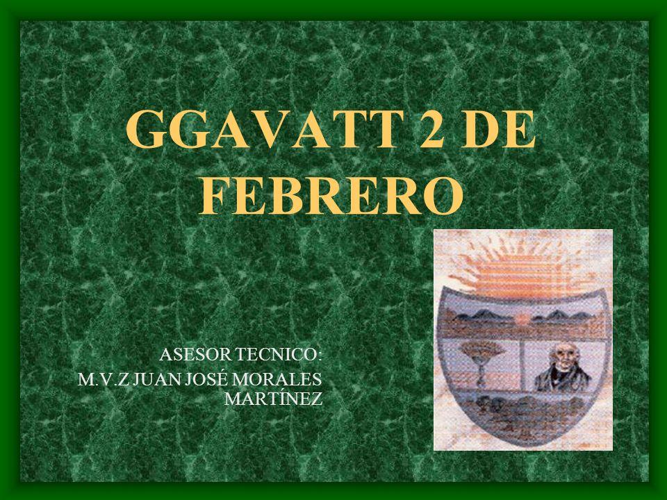 GGAVATT 2 DE FEBRERO ASESOR TECNICO: M.V.Z JUAN JOSÉ MORALES MARTÍNEZ