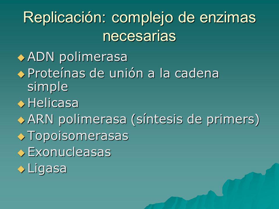 Replicación: complejo de enzimas necesarias