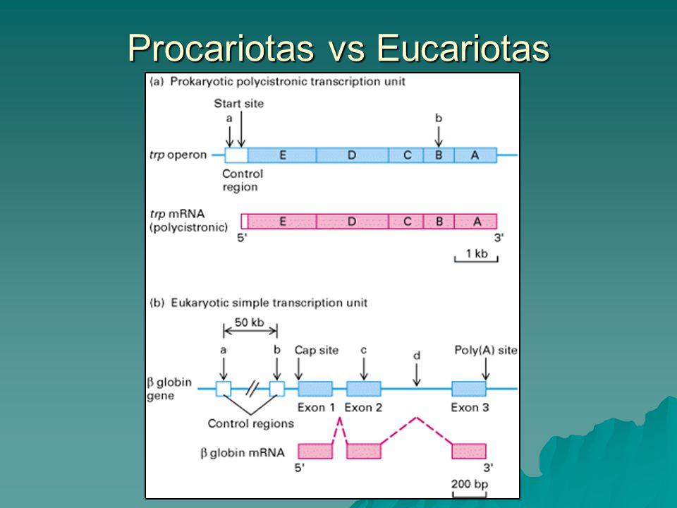 Procariotas vs Eucariotas