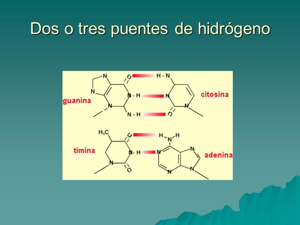 Dos o tres puentes de hidrógeno