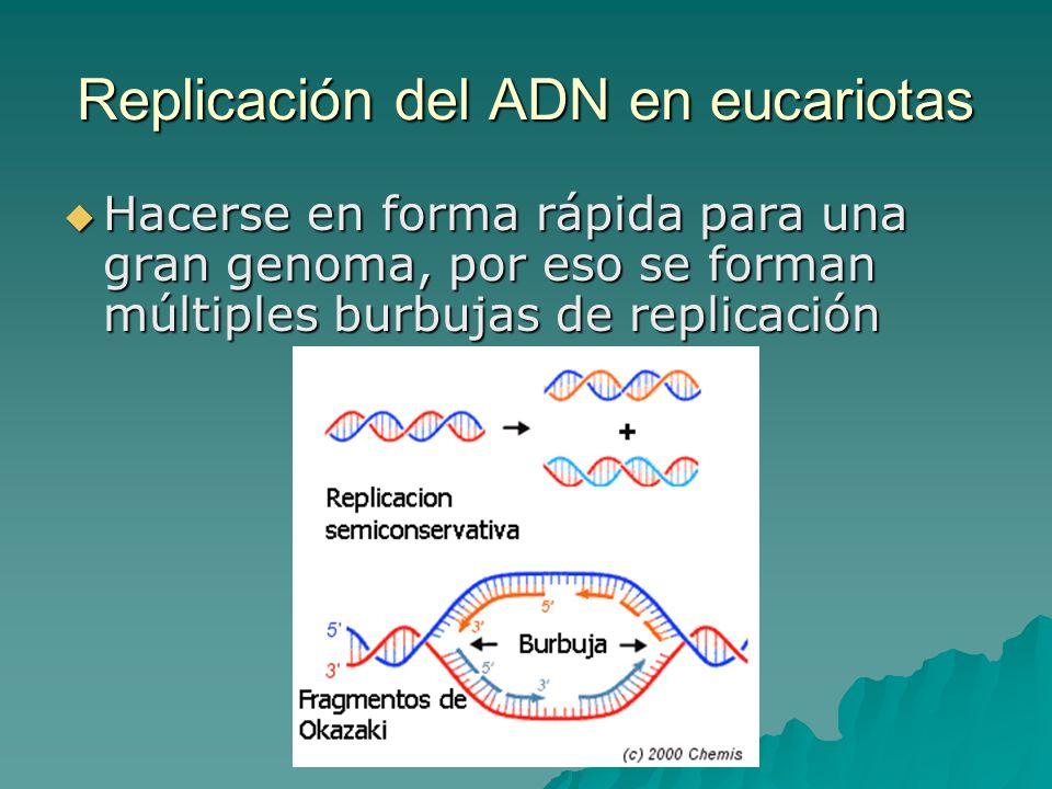 Replicación del ADN en eucariotas
