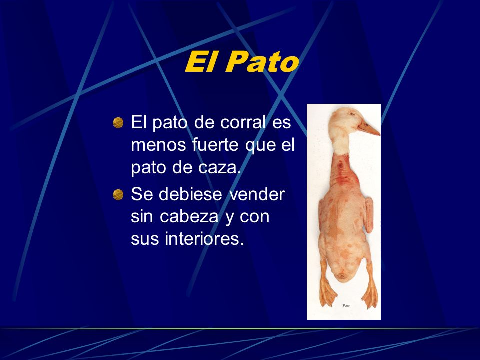 El Pato El pato de corral es menos fuerte que el pato de caza.