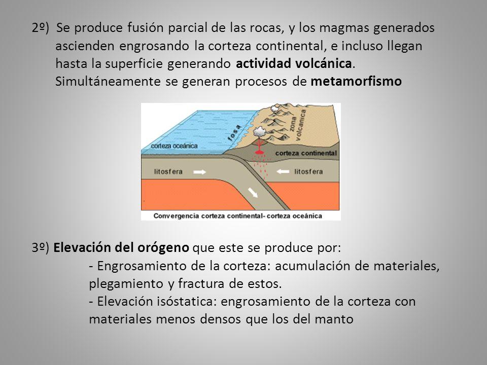 2º) Se produce fusión parcial de las rocas, y los magmas generados ascienden engrosando la corteza continental, e incluso llegan hasta la superficie generando actividad volcánica. Simultáneamente se generan procesos de metamorfismo