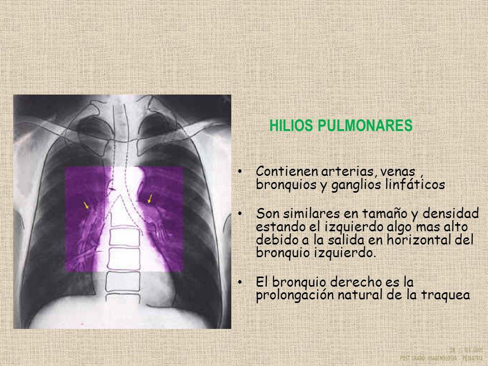 HILIOS PULMONARES Contienen arterias, venas , bronquios y ganglios linfáticos.