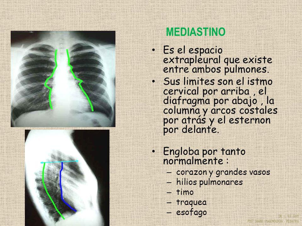 MEDIASTINO Es el espacio extrapleural que existe entre ambos pulmones.