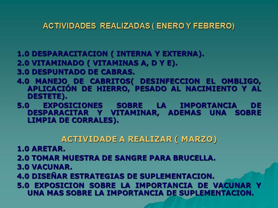 ACTIVIDADES REALIZADAS ( ENERO Y FEBRERO)