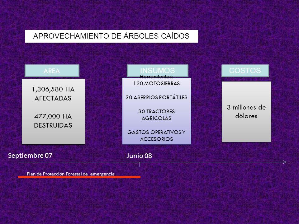 APROVECHAMIENTO DE ÁRBOLES CAÍDOS