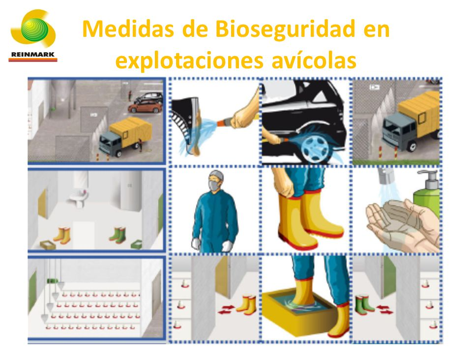 Medidas de Bioseguridad en explotaciones avícolas