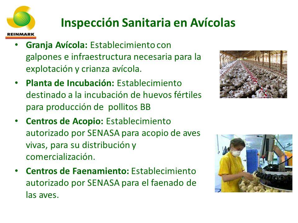 Inspección Sanitaria en Avícolas