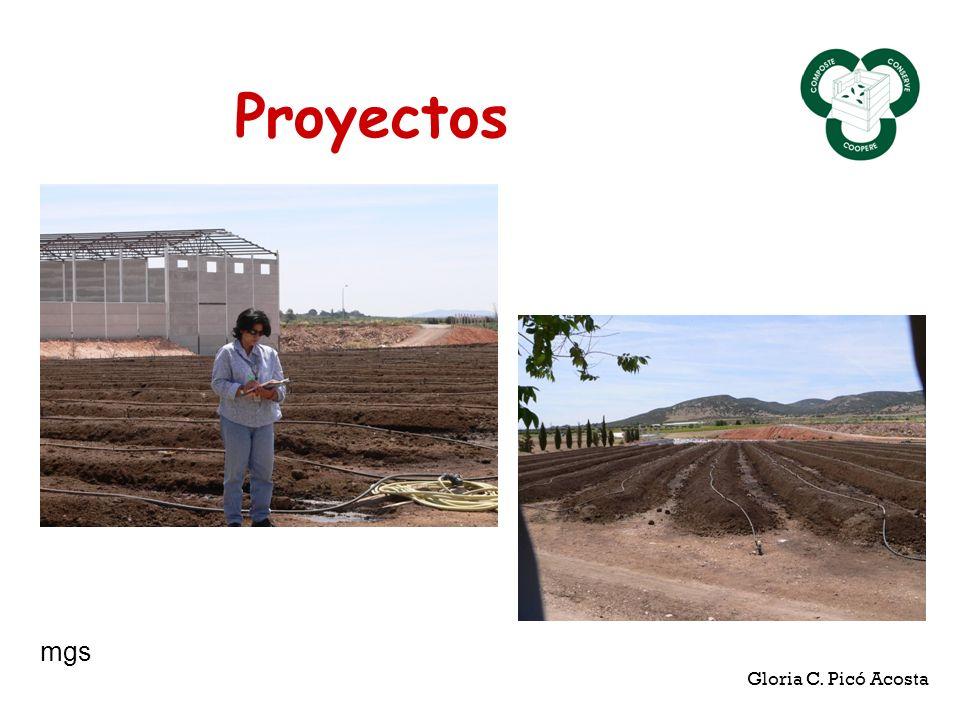 Proyectos mgs Gloria C. Picó Acosta
