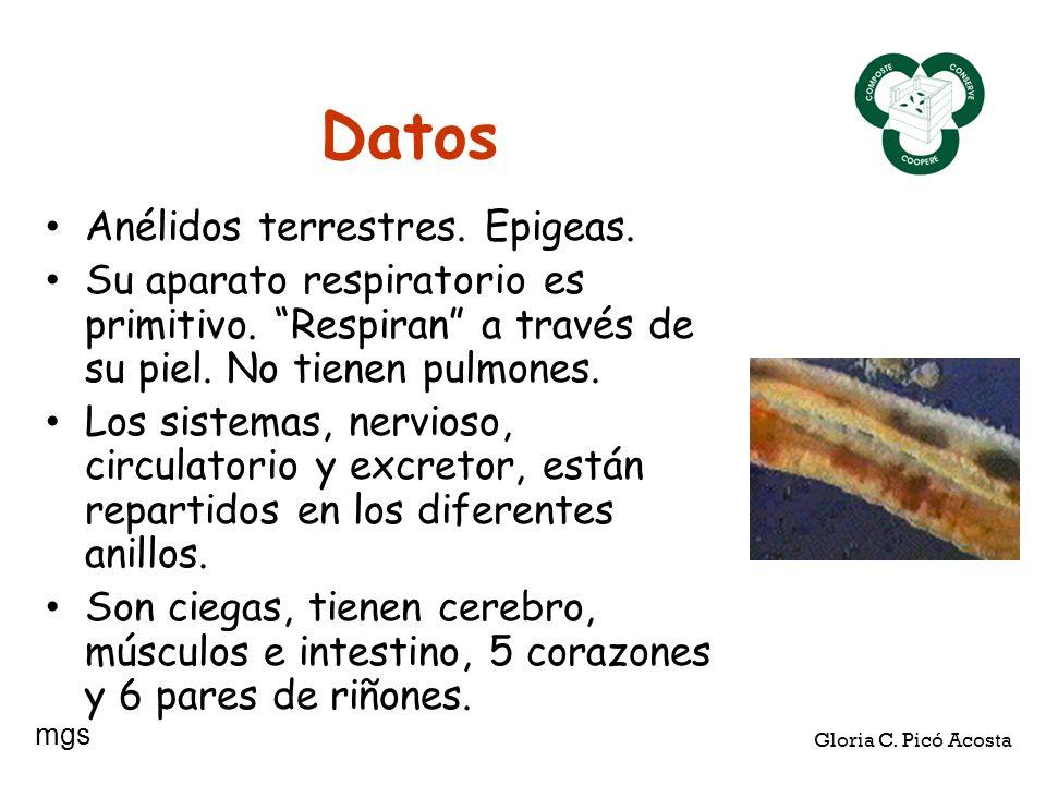 Datos Anélidos terrestres. Epigeas.